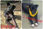 Quick Transformation Leads to Dog Adoption